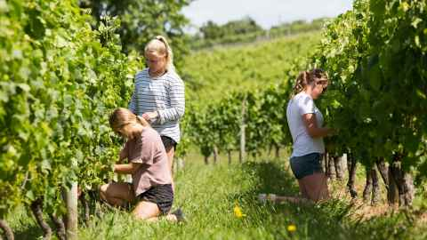 Wine student in vineyard