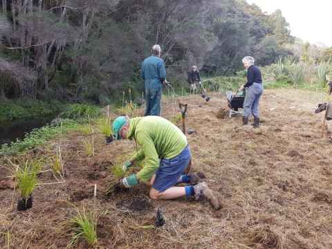 Conservation working bee at Matuku Link Reserve, Te Henga