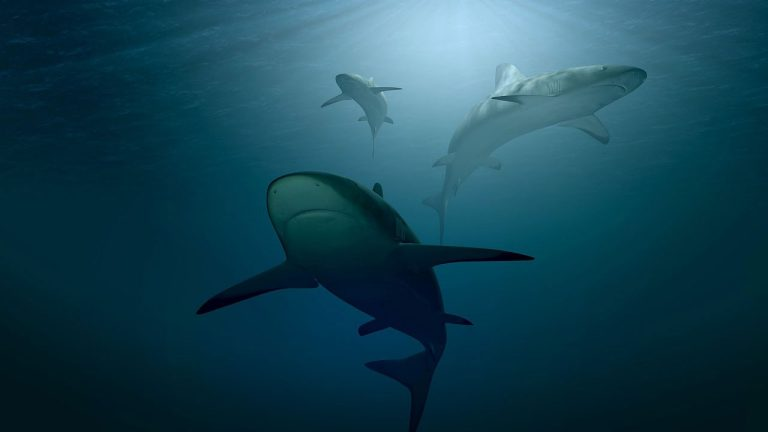 Sharks swimming in their ocean home: Veronica Rotman questions government culls in the name of public safety.