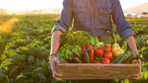 A man holds a box of freshly picked vegetables in the morning light - an organic future for food sustainability. Photo: iStock