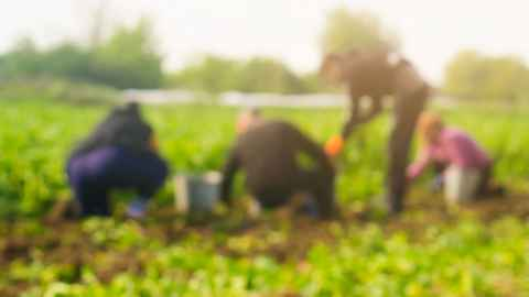 The image shows a group of farm workers in a field: Many seasonal migrant workers don't speak up because they fear losing their jobs and, by extension, their visas, making them subject to deportation. Stock photo: iStock