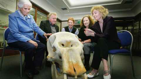 L to R: The late Dr Joan Robb, Derek Challis, Professor Mary Sewell, Mandy Harper and Professor Michele Leggott, with the skull of Mollie the elephant in 2008.