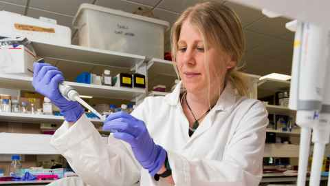 Invasive fruit fly