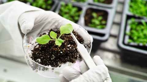 Plant and Food Researcher