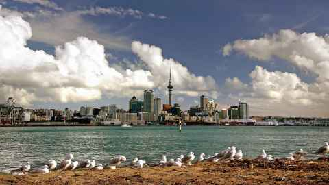 Auckland City from across the harbour, with seagulls