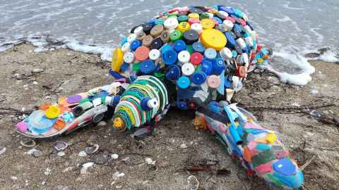 Darwin turtle made from beach litter.