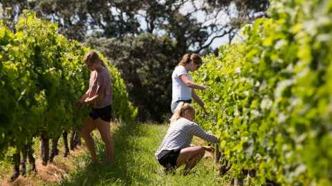 Students at Goldies Vineyard