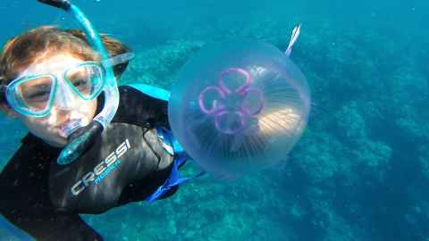 Mallory Sea, Marine Science, diving with jellyfish