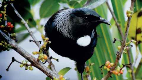 Native tui