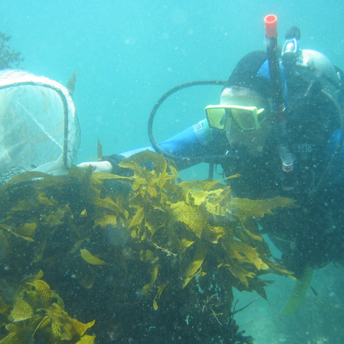 how to become a marine environmental economist